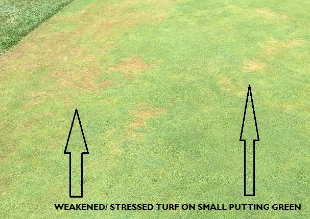 Golf course management - stressed green